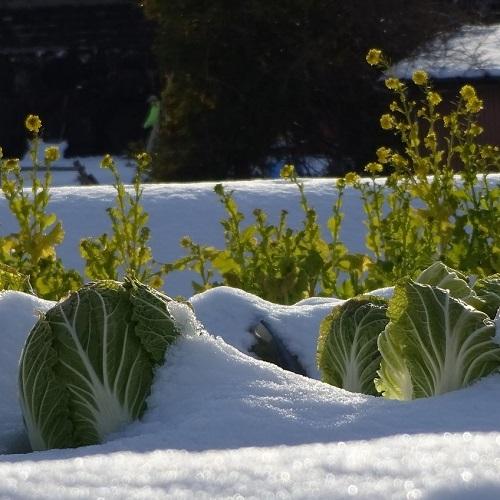 Gemüsebeet im Schnee