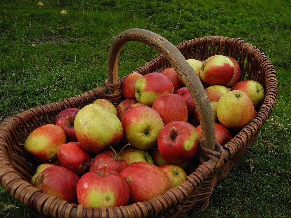 Apfelkorb-melogo